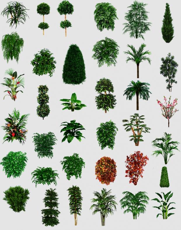 Misc Plant Tree Texture