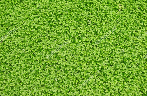 small green plant texture