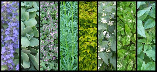 Botanical Plant Textures