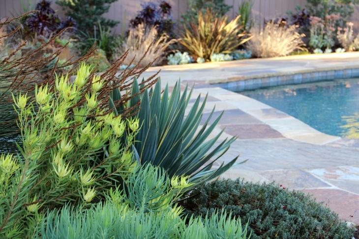 pool side foliage garden
