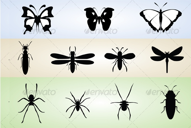 Butterfly and Insects Vector