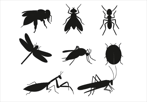 20 insect vectors eps png jpg svg format download