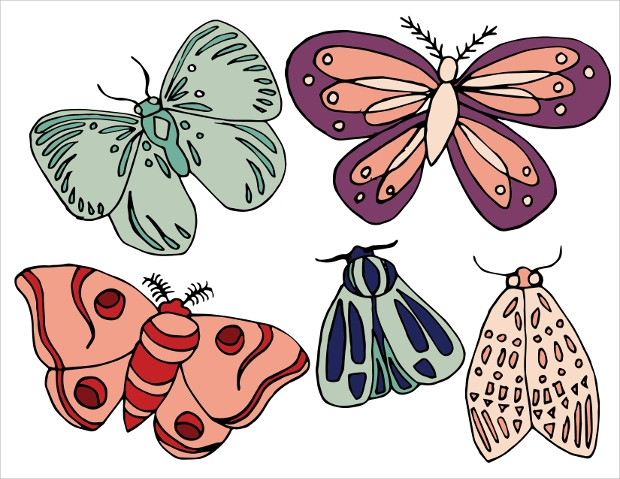 Butterfly Insect Vector Design