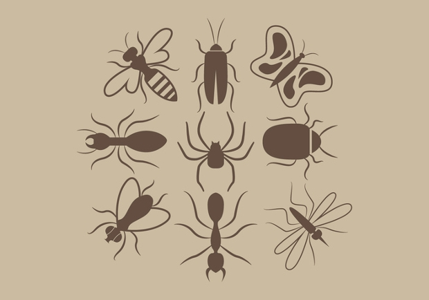 Insects Silhouettes Vector