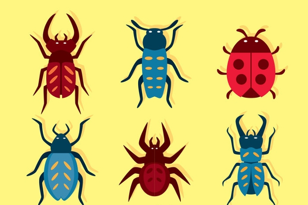 insect bug set vector
