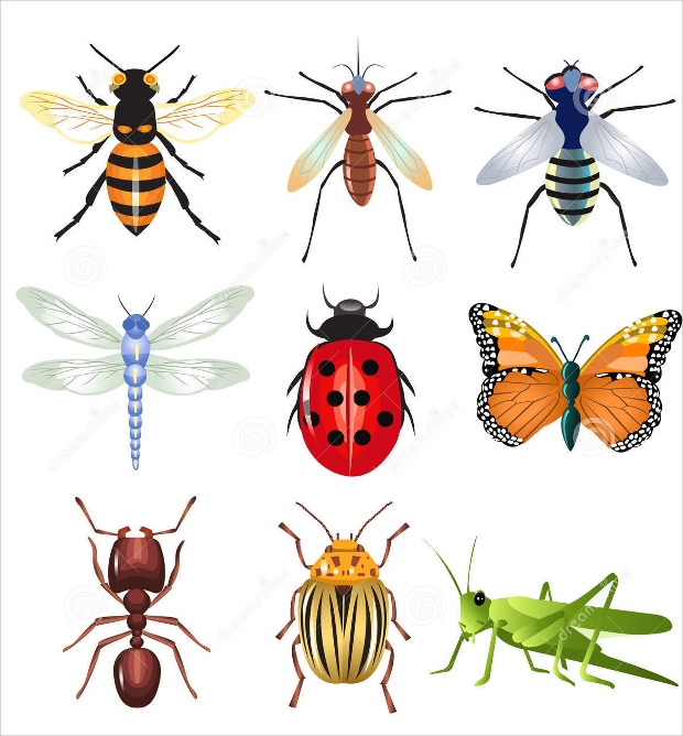 Set of Insects Vectors