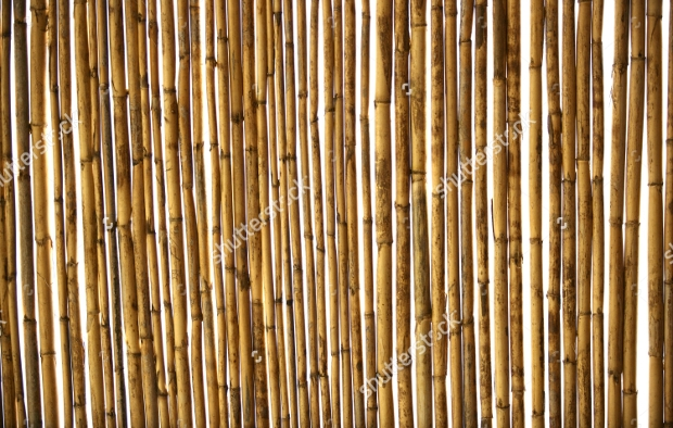 Dried Cane PSD Texture