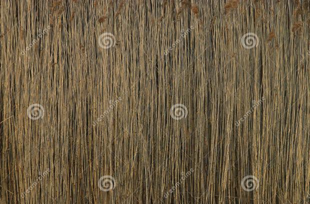 bamboo cane texture1