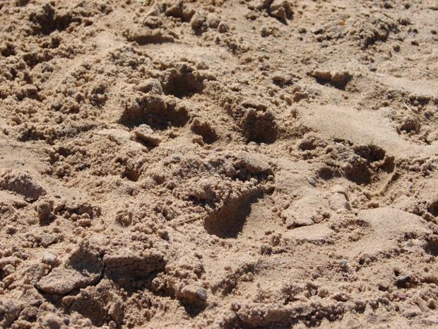 Gritty Beach Sand Texture