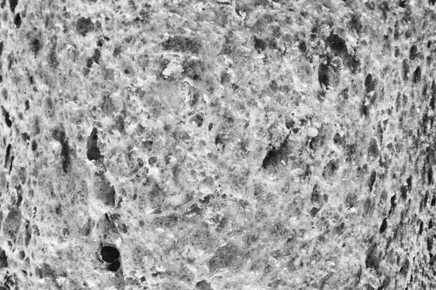 Wheat Bread Texture