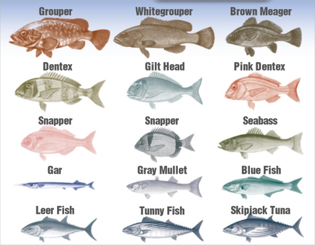 mediterranean fish brushes