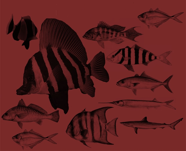 high quality fish photoshop brushes
