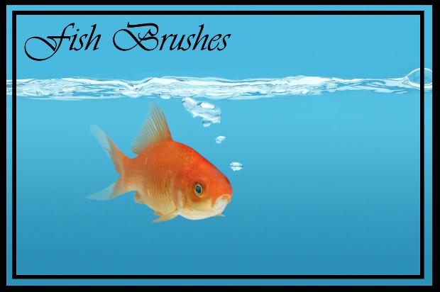 gold fish brush set