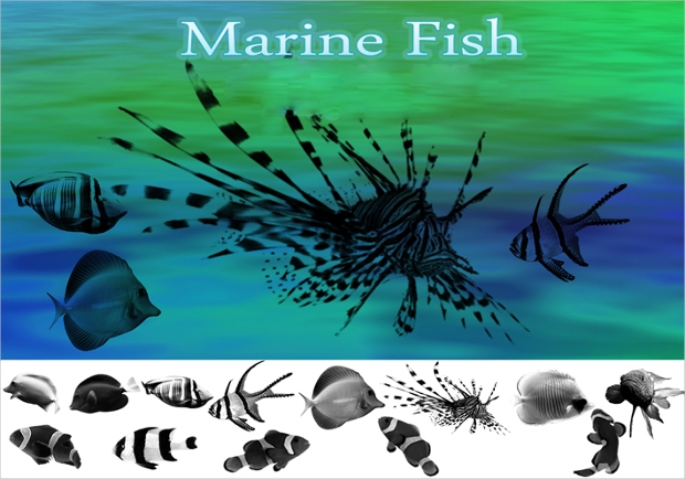 marine fish brushes1