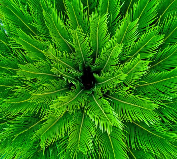 Free Nature Pattern