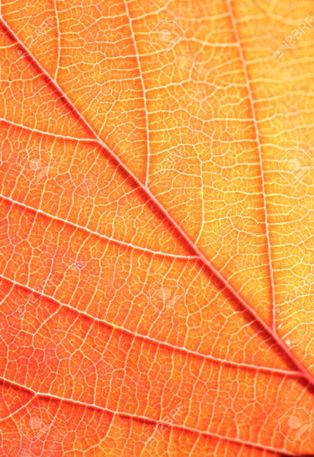 nature leaf pattern