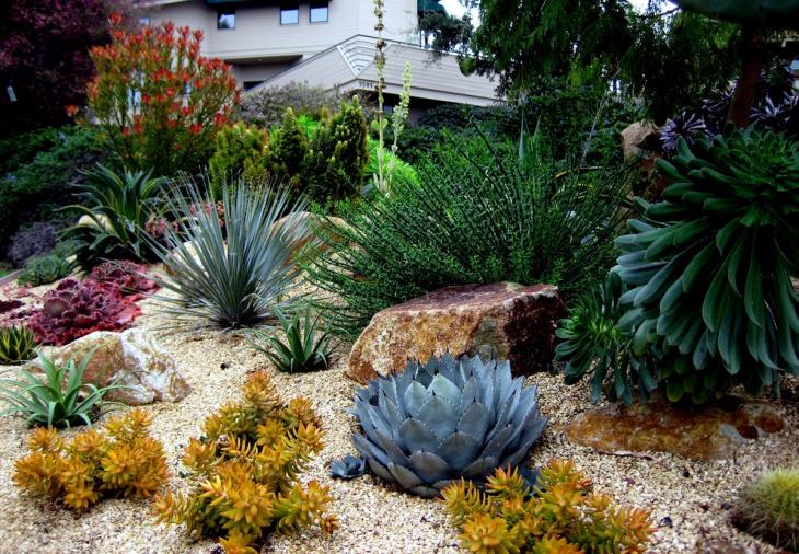 Small Cactus Garden Design cactus garden Small Cactus Plants