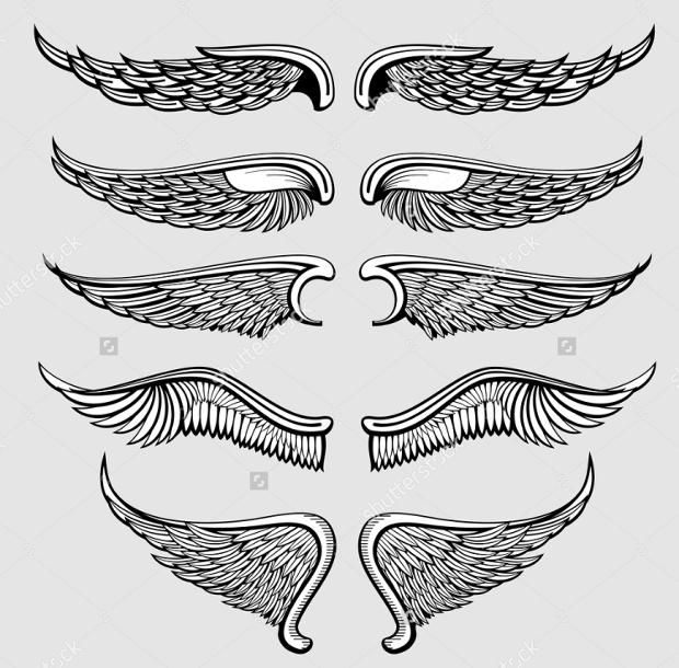 heraldic bird wings vector