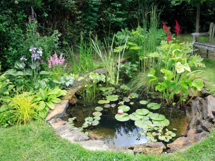 18 garden pond designs ideas design trends premium for Plants for around garden ponds