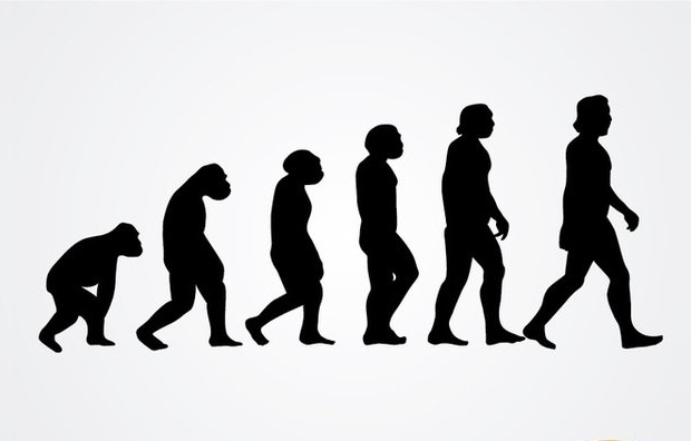 human evolution silhouettes vector