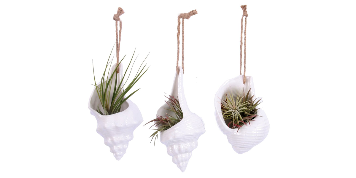 hanging shell planters