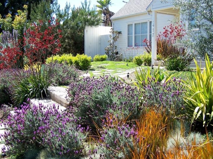 front yard lavender garden