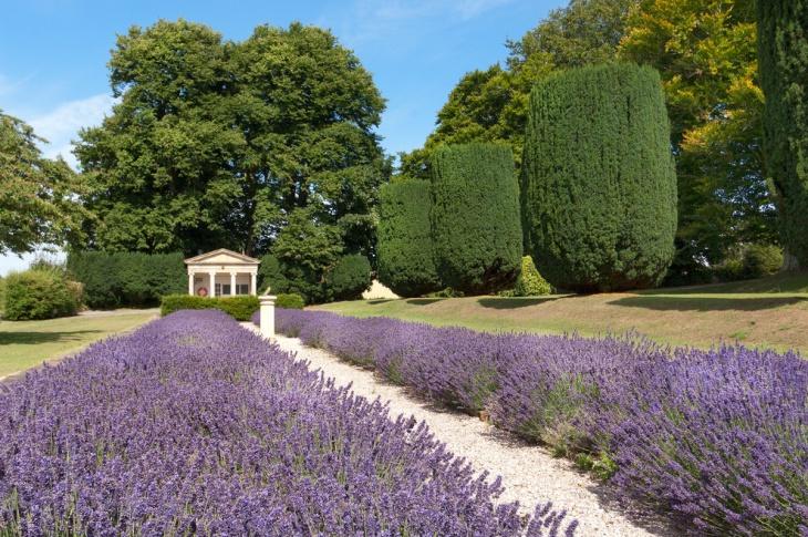mediterranean lavender garden