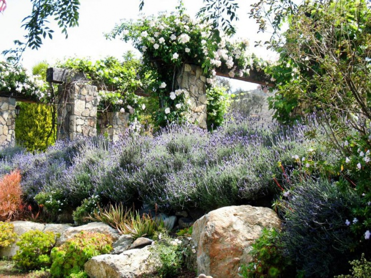French Country Lavender Garden