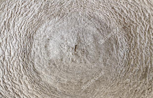 Whales Bone Texture