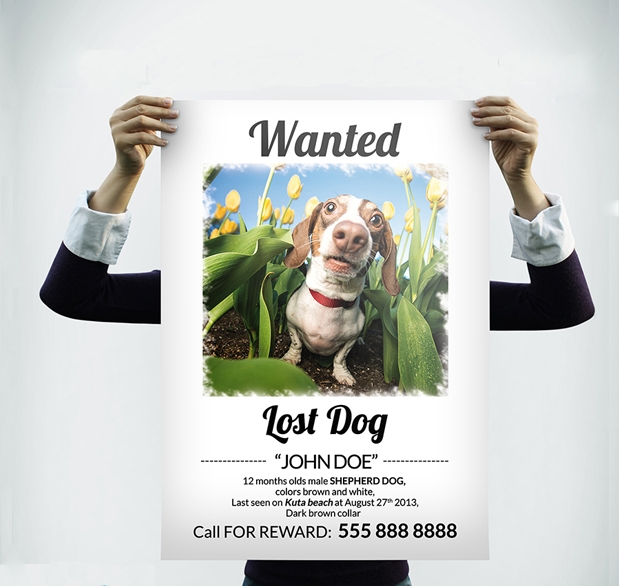 funny lost dog flyer design