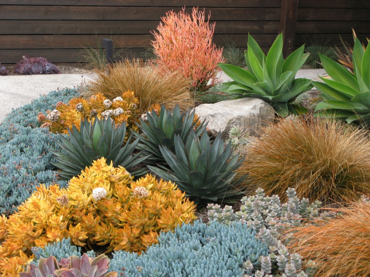 18 Succulent Garden Designs Ideas Design Trends Premium PSD
