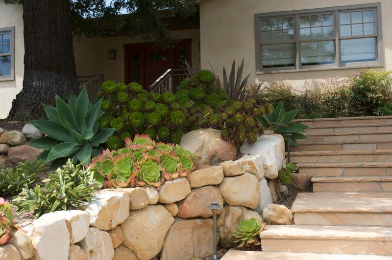 Succulent Landscaping Idea