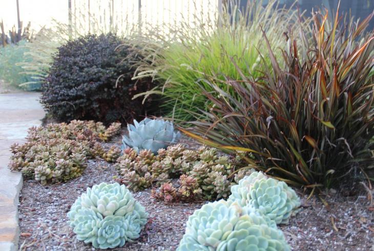 Modern Succulent Garden Idea