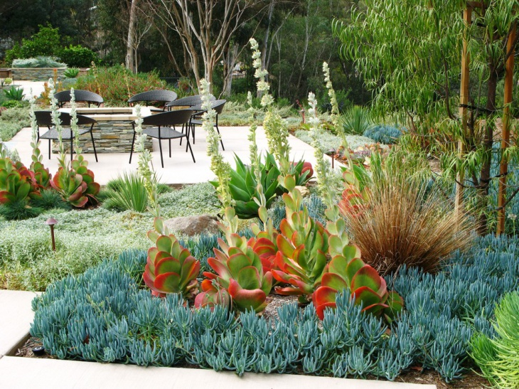 outdoor succulent garden idea