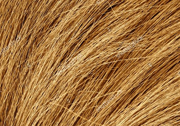 dry grass texture