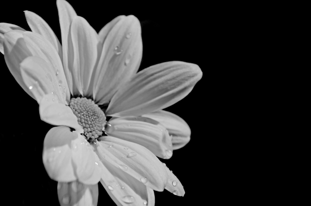 black and white flower background design