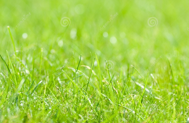 green grass background design
