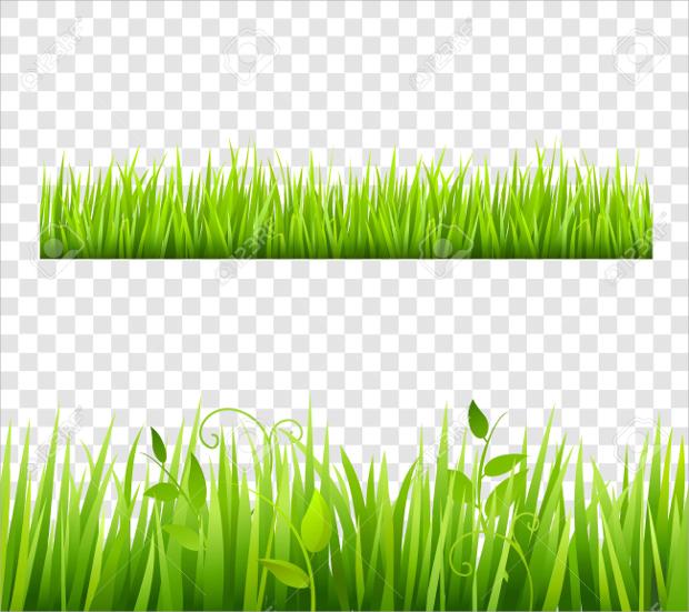 grass transparent background