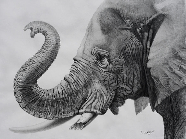 3d elephant drawing