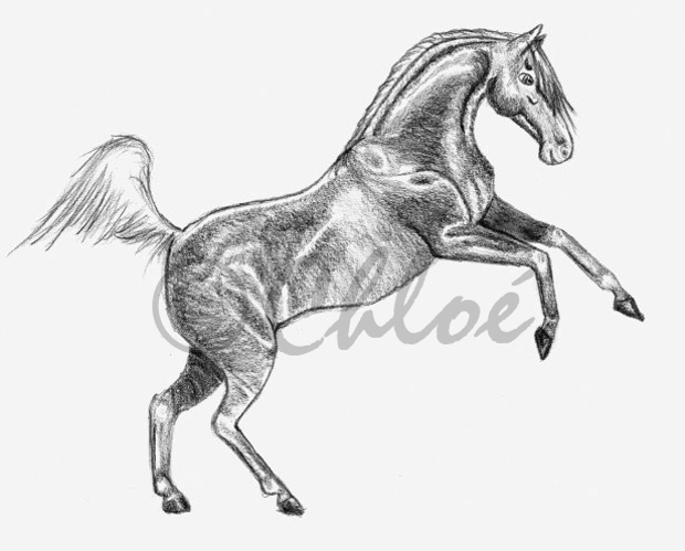 Rearing Horse Drawing