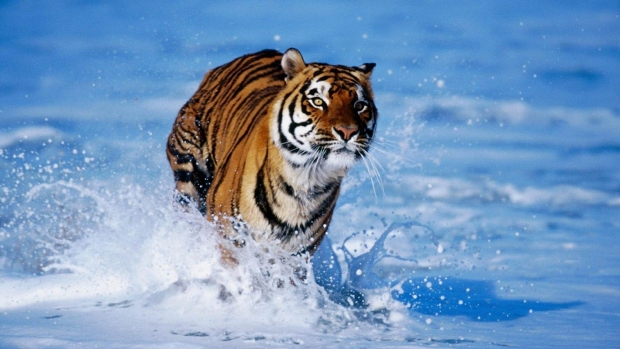 Wild Animal Wallpaper