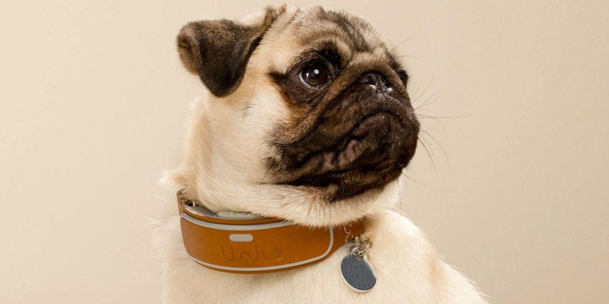 dog tracking collars