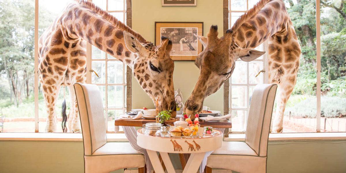 giraffe manor 1