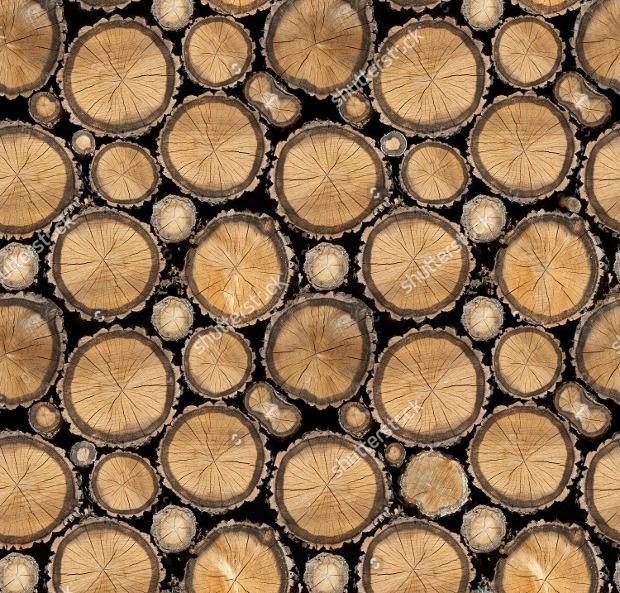 Seamless Tree Wood Texture