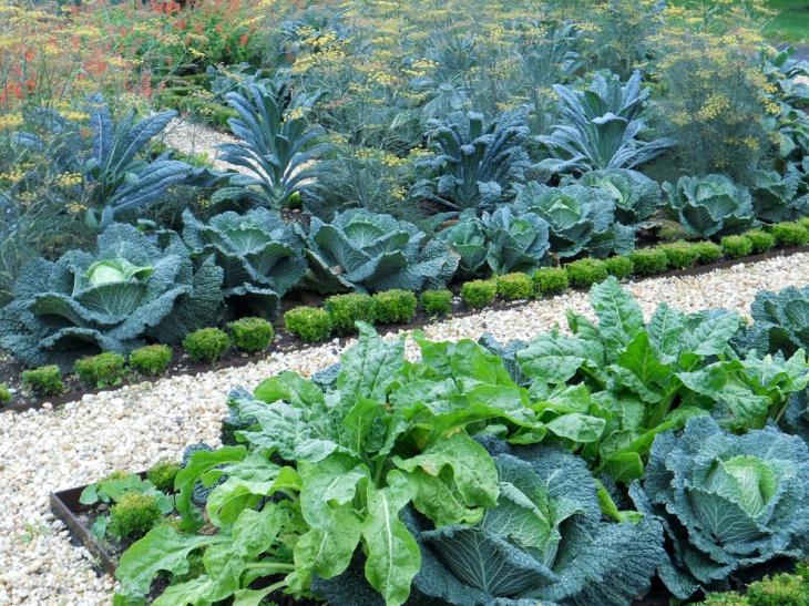 outdoor vegetable garden design