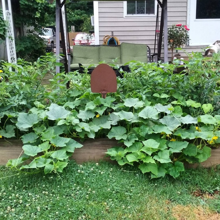 raised vegetable garden design