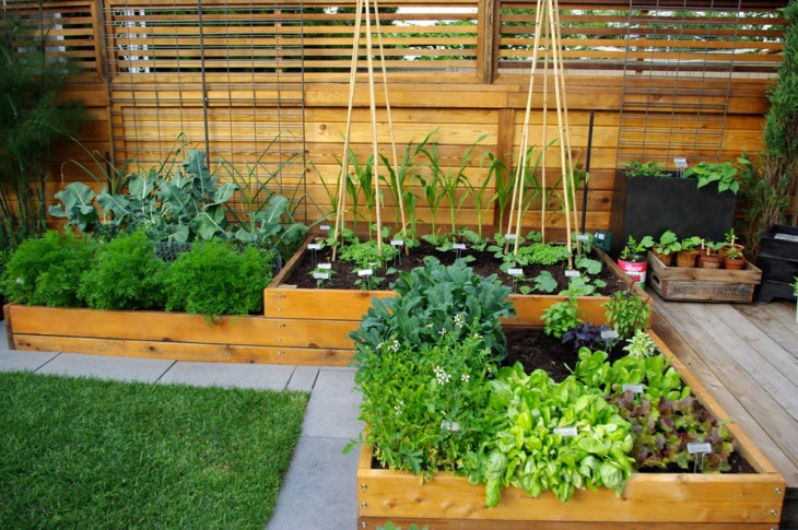 contemporary vegetable garden design