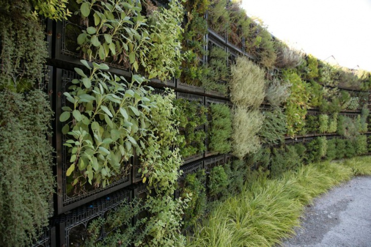 Edible Herb Wall Garden