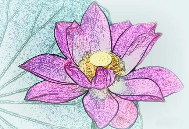 20 flower drawings sketches design trends premium psd vector pink lotus flower drawing mightylinksfo