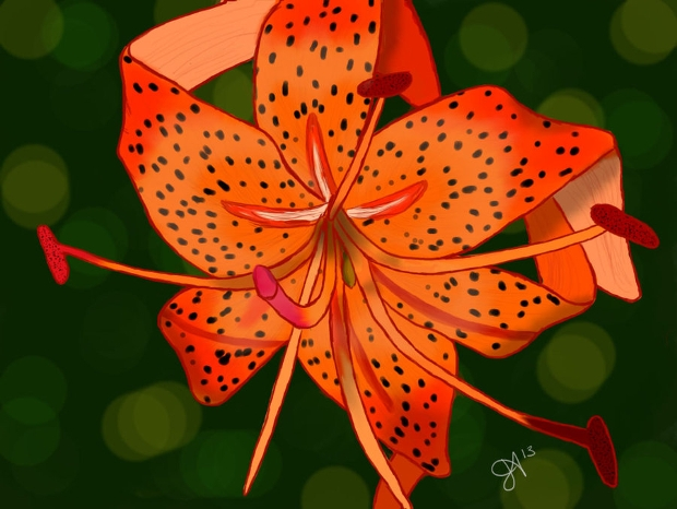tiger lily flower drawing